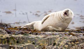 Ученые назвали животных, которые умеют смеяться