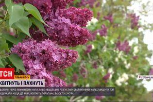 Новини України: де потішитися буйним цвітінням і зробити фото