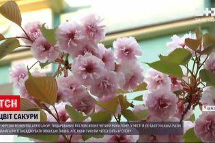 Новости Украины: в Херсоне расцвела аллея сакур, подаренных послом Японии