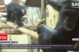 Новости мира: шимпанзе из немецкого зоопарка исполнилось 60 лет