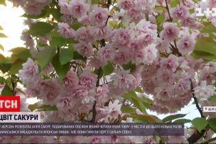 Новости Украины: в Херсоне расцвели сакуры, которые подарил посол Японии