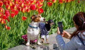 В Германии хотят лицензировать домашних собак: зачем инициатива и чем грозит проваливаниt экзамена