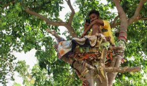 Індійський студент з COVID-19 самоізолювався на дереві, щоб не наражати на небезпеку свою сім'ю (фото)