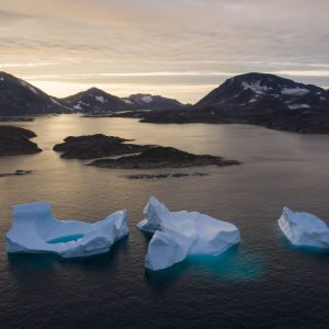 Арктика позеленеет из-за потепления — ученые