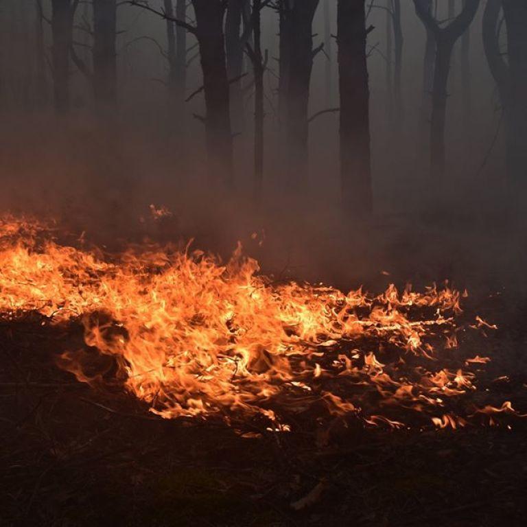 Густим димом накрило дорогу: у Дніпропетровській області сталася велика пожежа