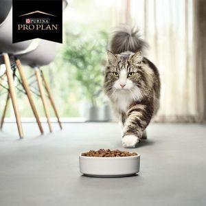 Кіт VS алергія: що робити, коли дуже хочеться мати кота та чи насправді коти викликають алергічні реакції