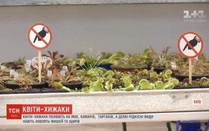 Киянка зібрала найбільшу в Україні колекцію квітів-хижаків, що полюють на мух і тарганів