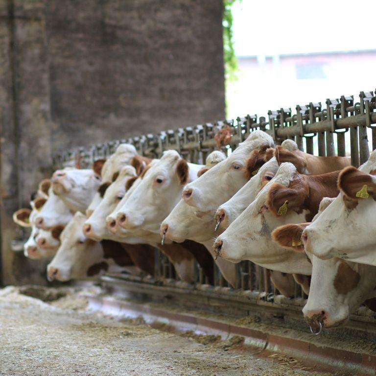 Агресивне веганство. Вегетаріанці переходять дозволену межу у протистоянні м'ясоїдам