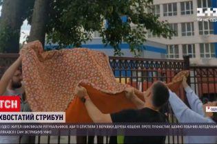 Новини України: в Одесі, аби врятувати кошеня, рятувальникам довелося підігнати спецтехніку