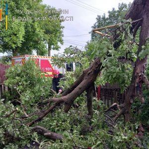 Залиті домівки, повалені дерева, потрощені авто: як Одеса оговтується після нічного армагеддону
