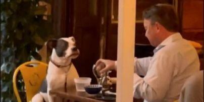 В Нью-Йорку господар повечеряв у ресторані зі своїм собакою і розчулив соцмережі: відео