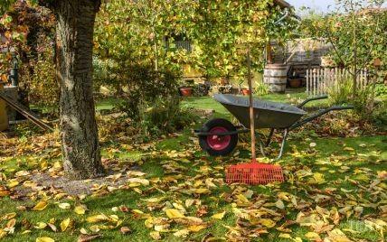 Роботи в саду восени: обприскуємо, удобрюємо та утеплюємо рослини