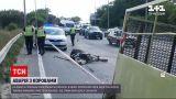 Новини України: на київській магістралі водій перевозив корів та спровокував ДТП - тварини загинули