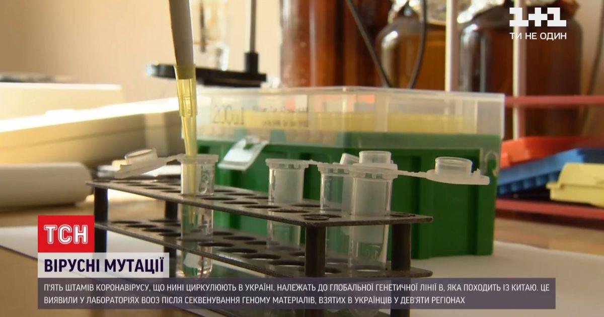 ВОЗ исследовала вирусные мутации в Украине и обнаружила 5 штаммов китайского коронавируса