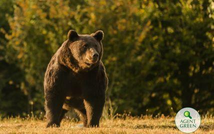 Принц Лихтенштейна попал в скандал: его обвинили в убийстве крупнейшего в Румынии медведя