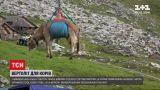 Новини світу: у швейцарських Альпах з десяток корів довелось спускати з гір гвинтокрилом