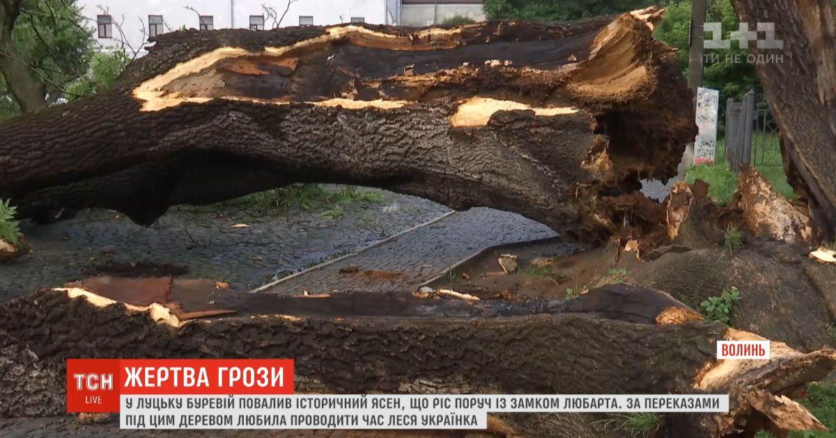 В Луцке после грозы упал 200-летний ясень
