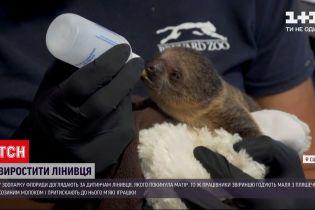 Новости мира: в зоопарке Флориды ухаживают за детенышем двупалого ленивца, которого бросила мать