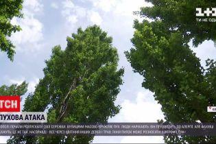 Новости Украины: насморк, слезотечение и чихание - есть ли причиной этих симптомов пух тополя