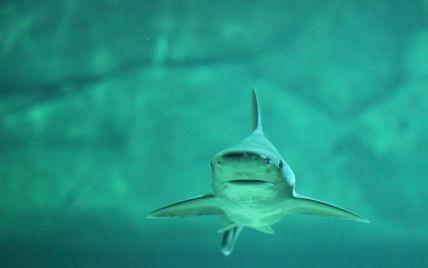 В Австралії акула-людожер напала і загризла чоловіка під час серфінгу