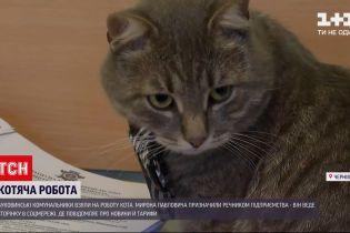 Новости Украины: на Буковине коммунальщики приютили бездомного кота, а затем взяли его на работу