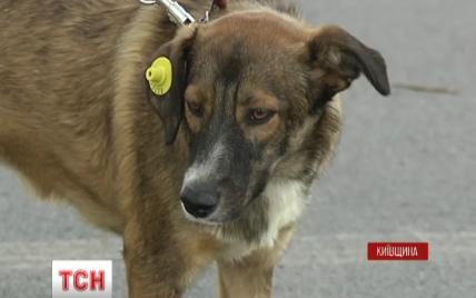 Под Киевом жестоко травят животных