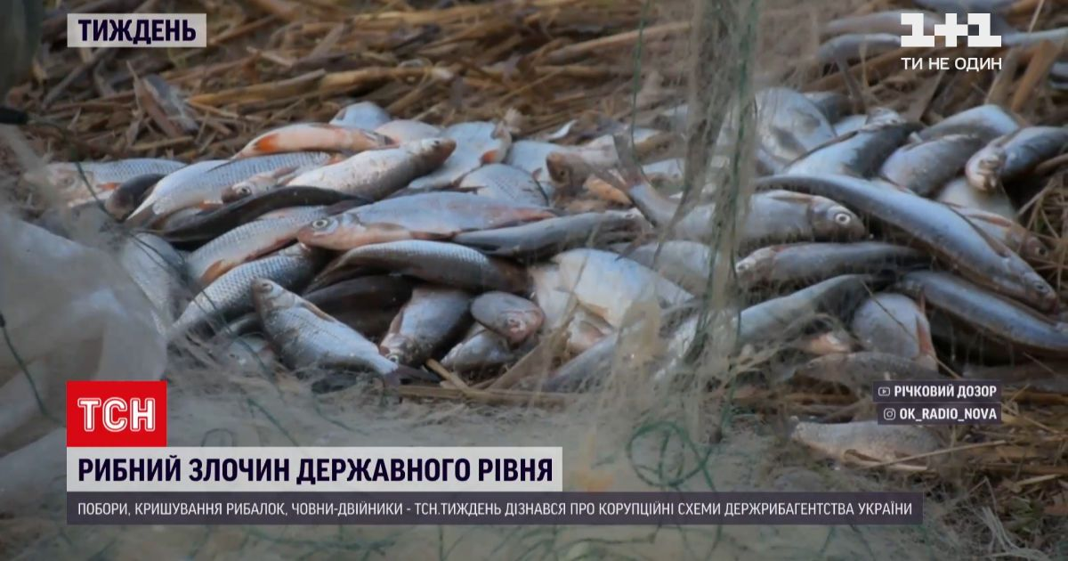 Новости недели: как среди украинского лимана появился ставок и почему браконьерство процветает