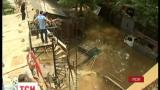 В Тбилиси на людей напал тигр, который во время наводнения убежал из зоопарка
