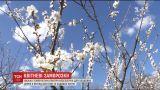 В ближайшие дни в Украине ухудшится погода