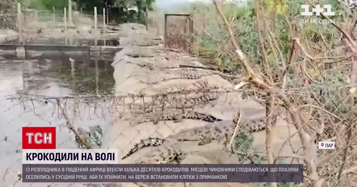 Новости мира: в Южной Африке полиция разыскивает крокодилов, сбежавших из питомника