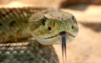 Во Львовской области 14-летний парень из-за укуса змеи попал в больницу