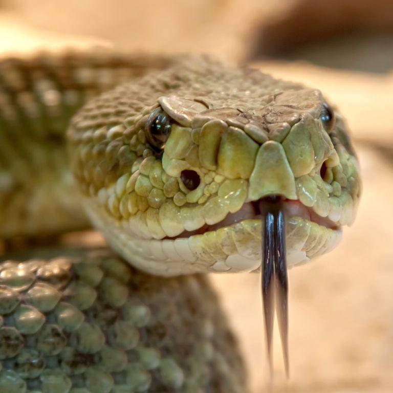 В реанимации в тяжелом состоянии: на Прикарпатье спасают мужчину после укуса змеи