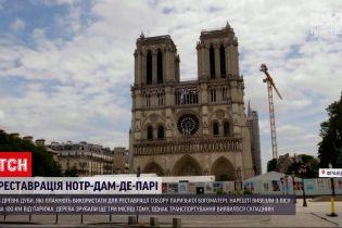 Новости мира: для реставрации Нотр-Дама вырубили 200-летние дубы