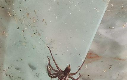 Усі дороги в норах: під Дніпром місцевість окупували величезні павуки