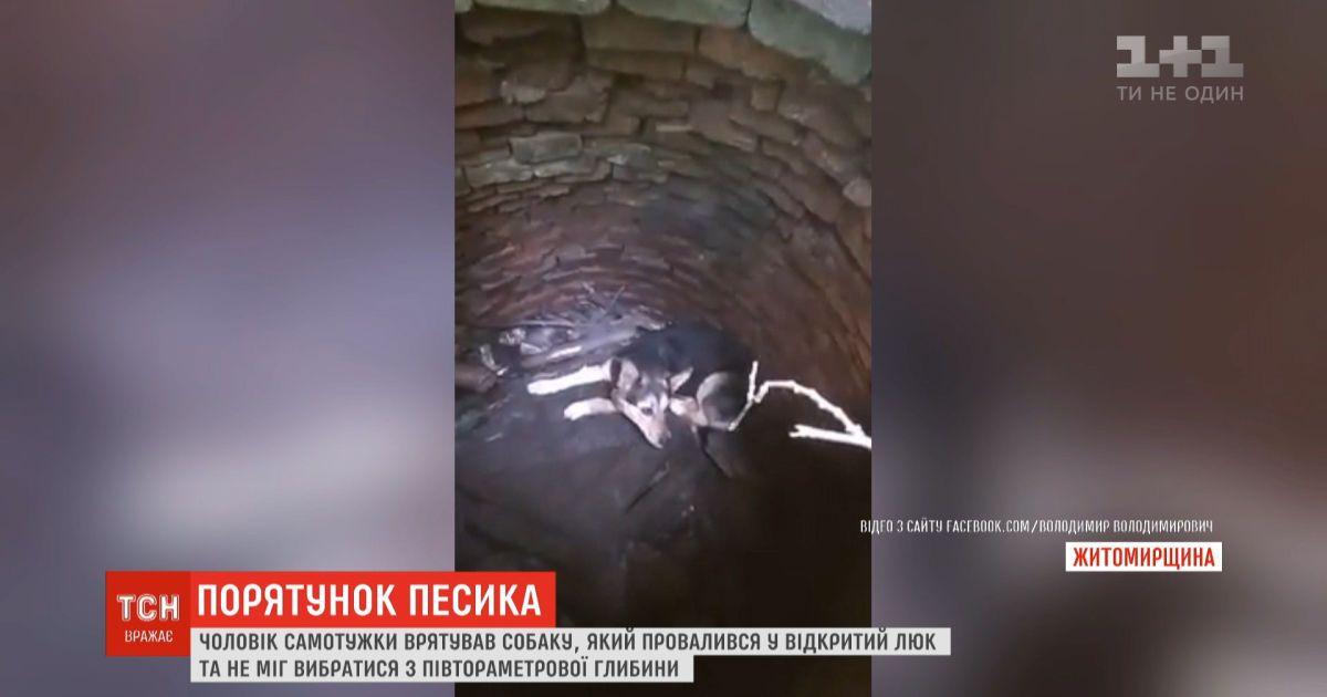 Спасение четвероногого: мужчина достал щенка из открытого люка