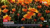 Новини України: у харківському екопарку стартував десятий бал хризантем