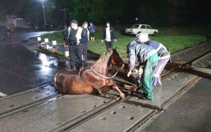 Зупинили потяг: на Волині рятувальники звільнили коня, який застряг на залізничних коліях (фото)