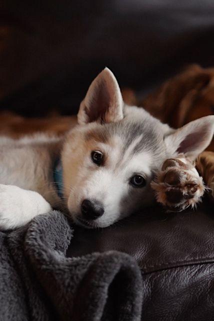 Собачье сердце. Ученые выяснили, почему четвероногие так сильно любят своих хозяев