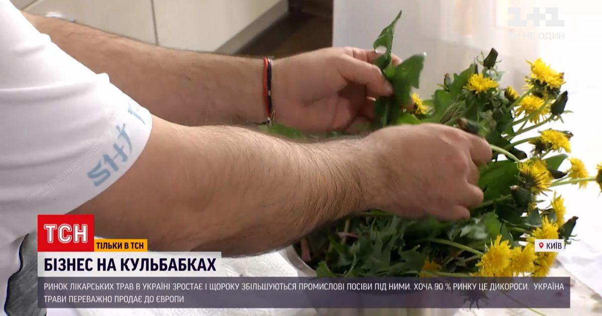 Новости Украины: что и на чем можно заработать, имея собственный кусок земли