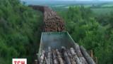 С Черниговщины в оккупированный Донбасс везут лес-кругляк