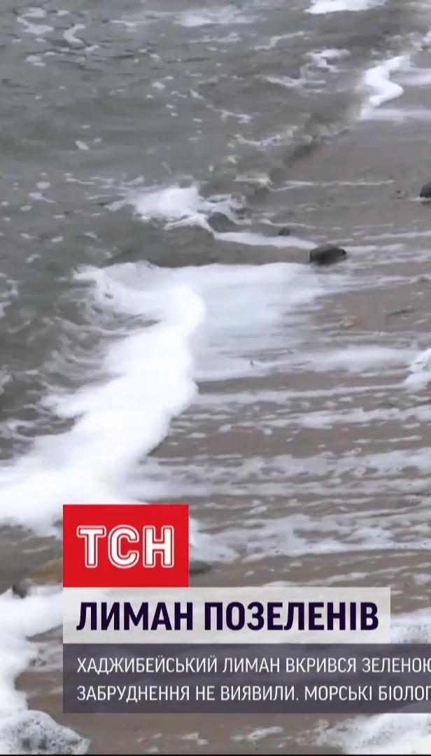 Хаджибейский лиман позеленел: поверхность воды покрылась неизвестным веществом