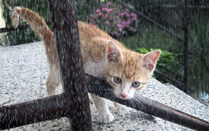 Прогноз погоды на 27 мая: в Украине местами дожди, но температура — до +27