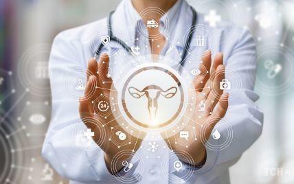 Женская репродуктивная система: что нужно знать о строении и функциях половых органов