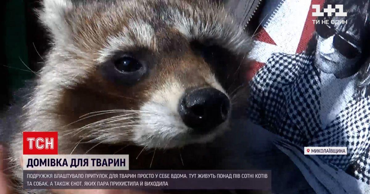 Новости Украины: супруги из Николаевской области приютился енота, который пострадал от жестокости