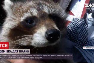 Новини України: подружжя з Миколаївської області прихистило єнота, який постраждав від жорстокості