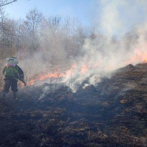 У Рівненській області люди палили сухостій, а ледь не спалили будинки