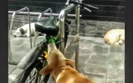 """У Мелітополі собака намагався """"поцупити"""" велосипед (відео)"""