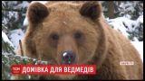 Ведмедицю Лялю, яку врятували з Дніпровського зоопарку, перевезли на Закарпаття