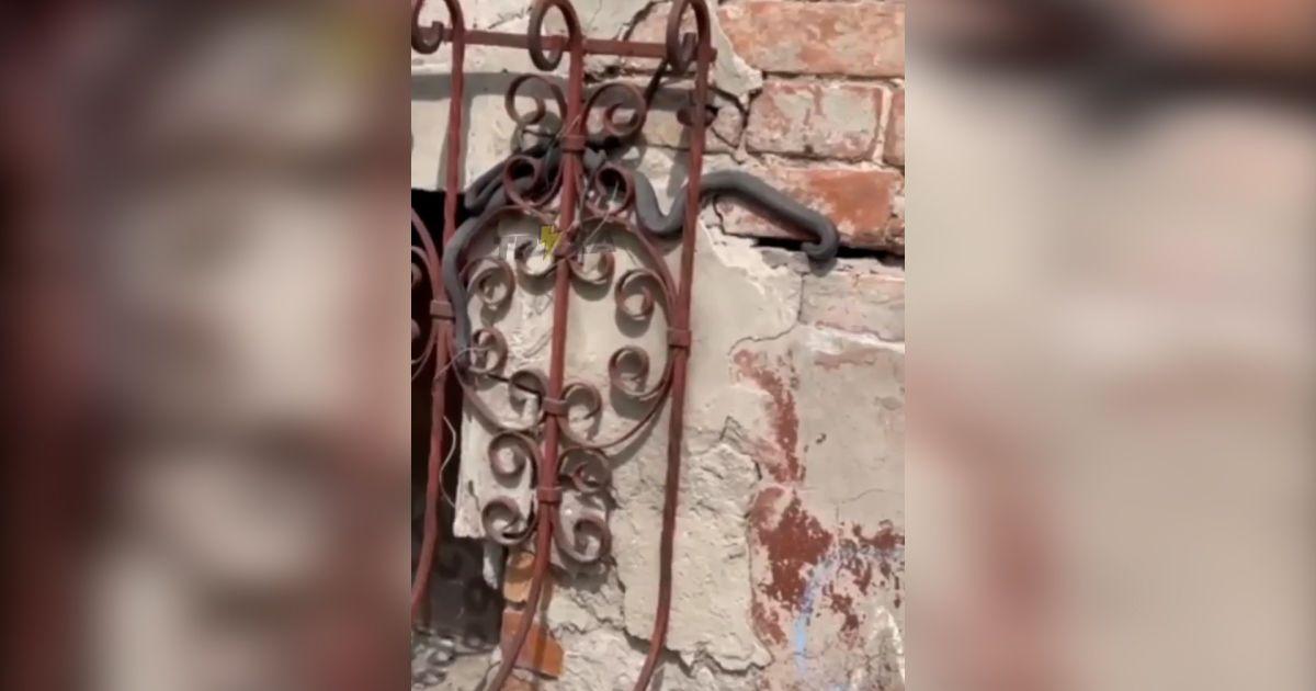 В Харькове змеи оккупировали дом