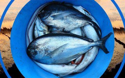 На крючок: куда отправляться на рыбалку и какую рыбу ловить в Украине